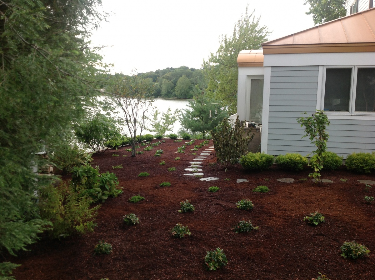 new plantings, mulching