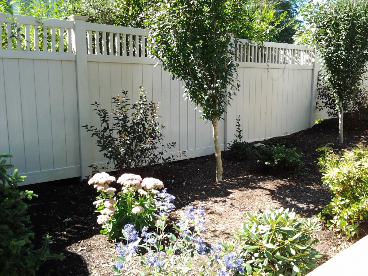 shrubs, tree maintenance