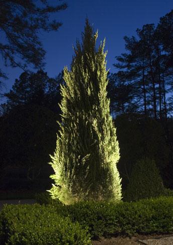 cast lighting, highlighting plants