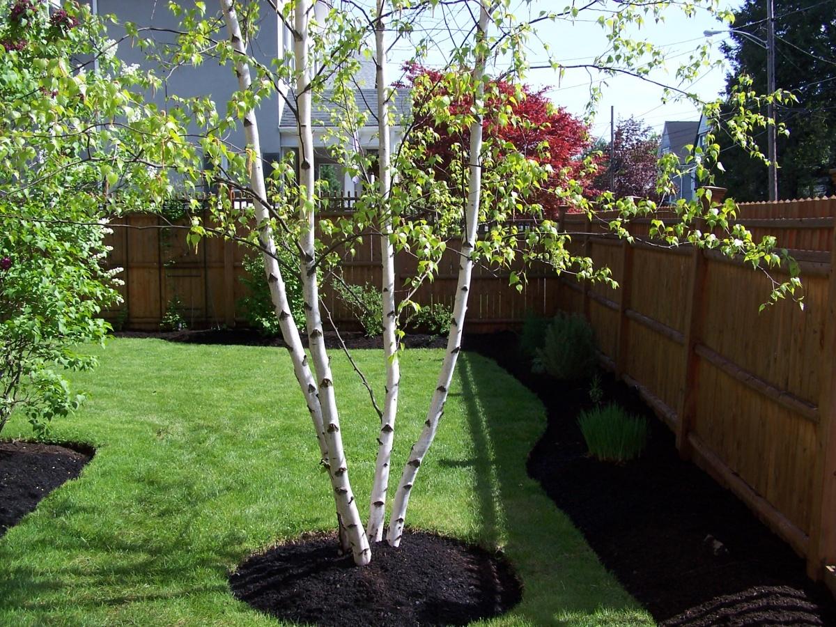 tree planting, Melrose, MA
