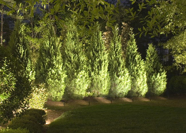 cast lighting trees