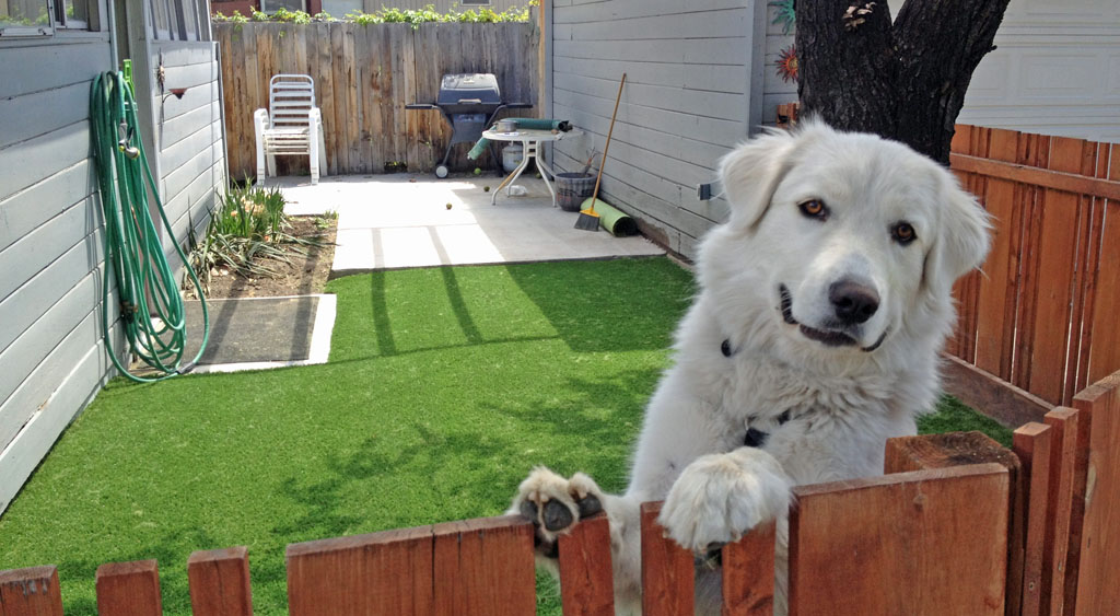 Dog friendly synthetic turf