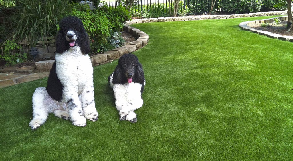 Synthetic turf is a durable alternative.
