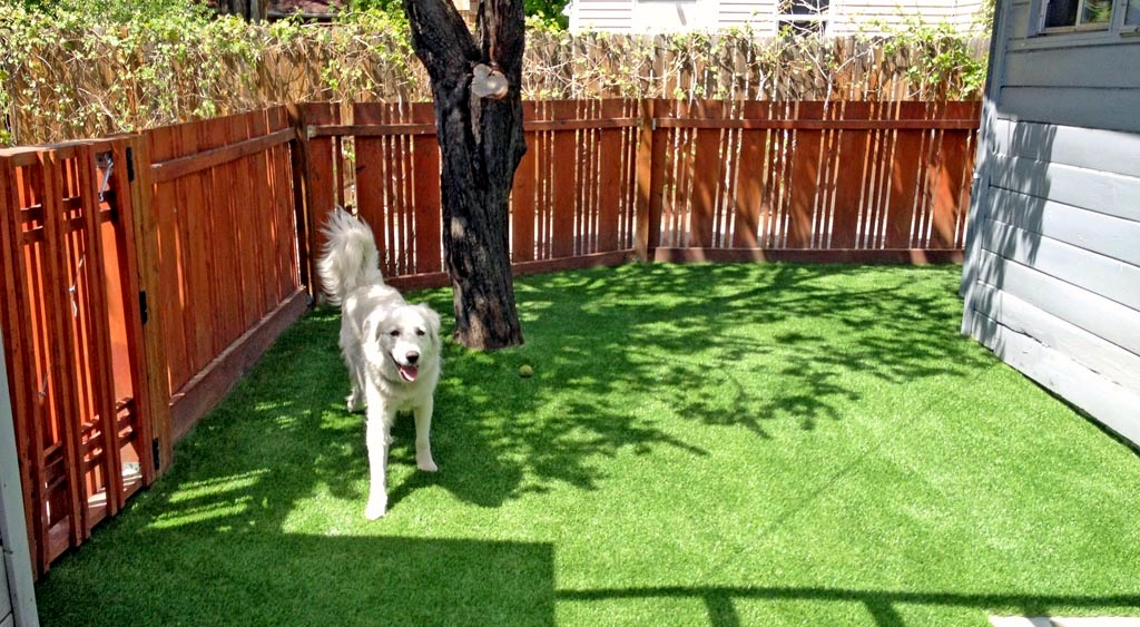 residential pet turf