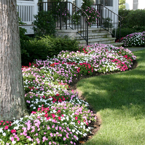 flower bed design, floral